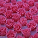 Ohchi Nursery - Boasting Japan's leading flower preservation technology