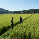 "No Chemical Fertilizers - Gentle to the Soil and Crops ""Tanaka Farm"""