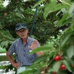 "Sweet cherry with a lot of flesh ""Kenichi Karube, Cherry farmer"""
