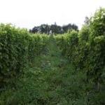 "Bruce Gutlove ""10R Winery"" - making high quality wine using Hokkaido grapes"