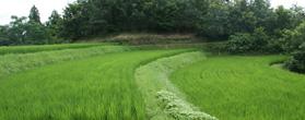 酵素農法で野菜づくり「農業 西文正」