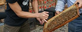 福田養蜂所の「ハチミツ」