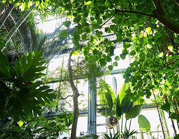 博士が愛した植物学に触れ癒される「高知県立牧野植物園」
