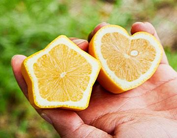 安全・安心、皮ごと食べられる「瀬戸田レモン」