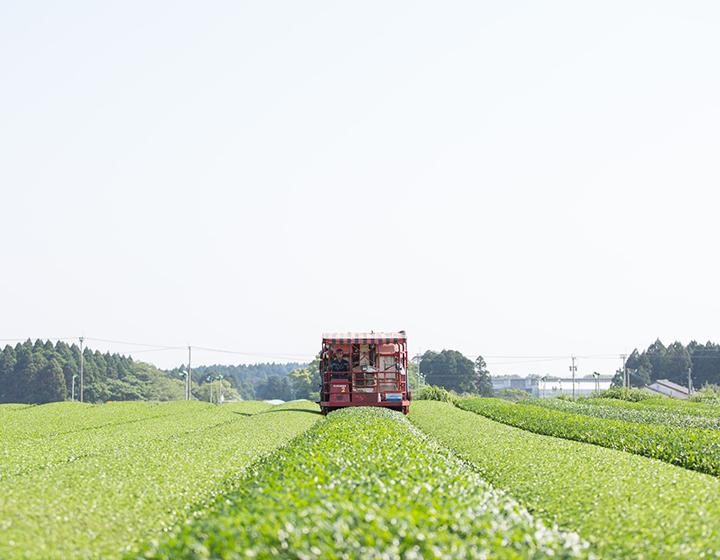 日本茶の可能性を世界に広げる茶師十段 「池田製茶」