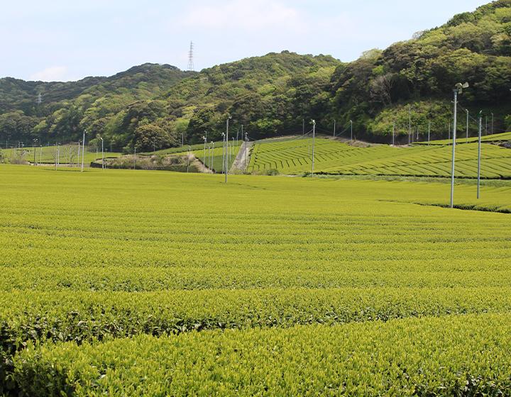"""""""茶どころ""""静岡の中でも最古のお茶の産地のひとつ 袋井市から発信する新たな日本茶文化 安間孝介さん"""
