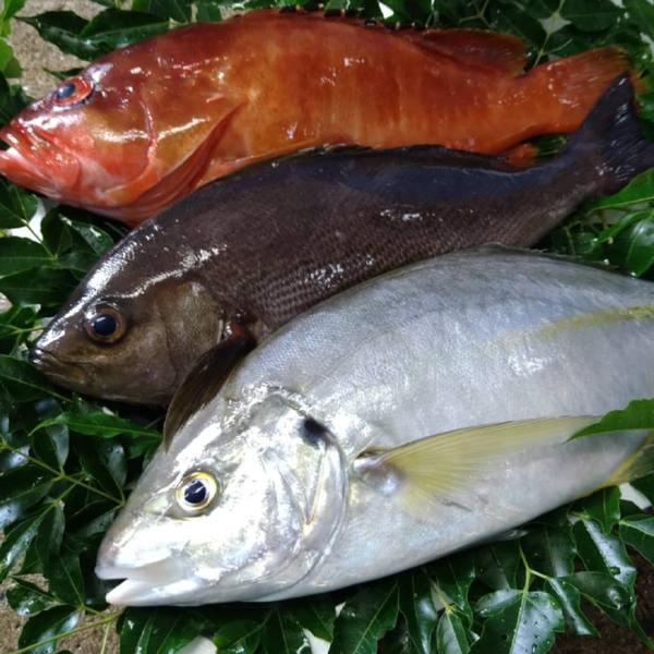 にほんものストアに長崎五島の高級鮮魚など新商品3点が追加