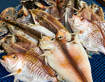 妥協しない日本一の魚屋「サスエ前田魚店」