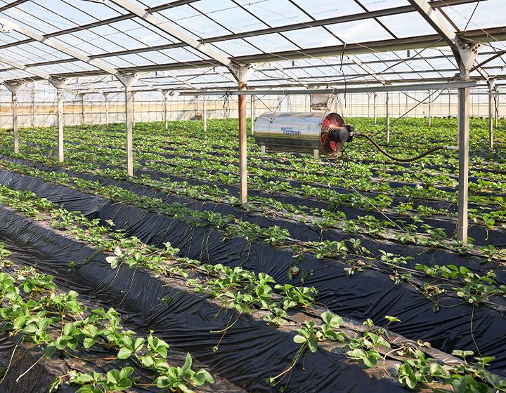 農場と研究所を併設する、国内ハーブ栽培のパイオニア「シモタファーム」
