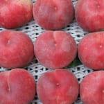 皮まで食べられる「ともちゃんちの桃」