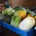 自家採取の野菜づくり「自然農園 岩崎政利」