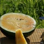 果肉がはじけるオレンジ色のスイカ 「東尋坊オレンジスイカ」
